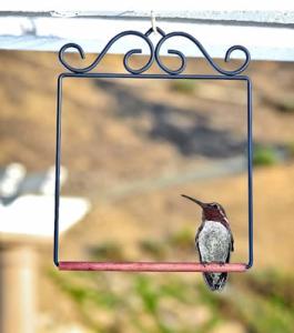 hbird swing